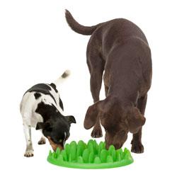 Cuenco-comedero interactivo para perros